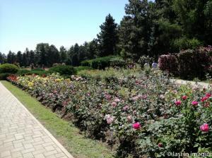 Gradina Botanica, Iasi